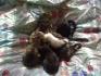 Подарявам малки котки