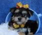 Очарователни малки кученца за осиновяване