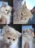 Внимание! Продавам Прекрасни, елитни котенца. Атрактивни цени.