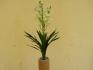Бяла Орхидея 60см