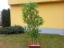 Изкуствен бамбук 10 стръка 180см