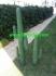 Изкуствен Кактус височина 1.70м