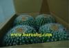 Изкуствен Кръгъл кактус