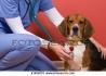 Ветеринарна клиника, Денонощна, Спешна помощ