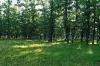 Купувам гора