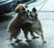 Подарявам кученца СПЕШНО!!!