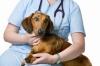 Ветеринарна помощ, Денонощна, Спешна.