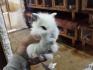 Мини зайци от ферма.