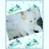 Продавам Пухкави синеоки котенца - Мечта. Хималайски - Himalayan, Colourpoint Kittens