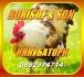 Инкубатори  от Borisof & son