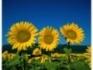 ОБЛАСТ СИЛИСТРА-Купува земеделска земя!!!!!!!!!!!