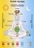 Kурс по Сахаджа йога