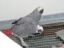 Папагали-Кралско жако
