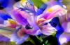 Маг Касиопея – Skype: kasiopea707 – Диагностика на Кармата