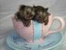 Бебе маймуни маймуни за осиновяване.