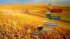 Купувам област Монтана в  общините Монтана, Бойчиновци, Брусарци, Вълчедръм, Лом, Медковец и...