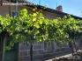Продава се имот в село Зараево
