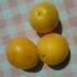 Семе от едри жълти джанки