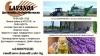 Дестилерия за етерични масла - Косене - Транспорт - Дестилация