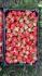 Корени ягоди и малини