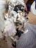 Котенца за Продан. Малки Котета 0988979306