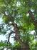 Реже и  подкастря високи и опасни дървета, коси висока трева и храсталак