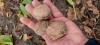 Био орехи от производител